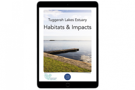 Tuggerah Lakes Estuary - Habitats and Impacts
