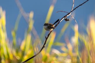 small bird in Mardi wetlands